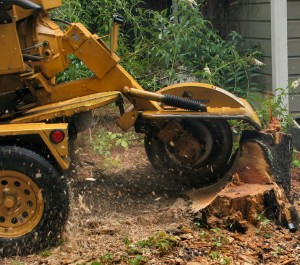 Stump Removal Greenlawn